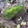 Mossy log.....