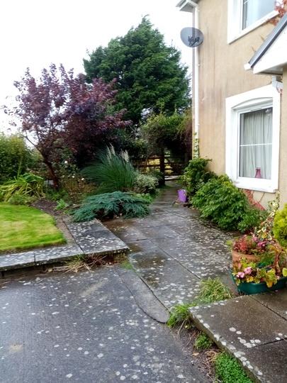 Llyswen Garden 1-11-19