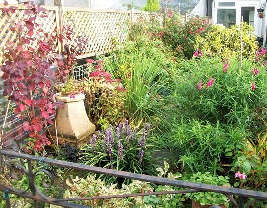 Overgrown garden in November ...