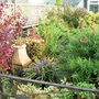 Overgrown garden in November ...