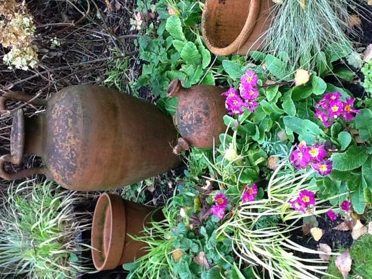 Polyanthus (Primula polyanthus (Primrose))
