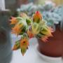 Succulent flowers......