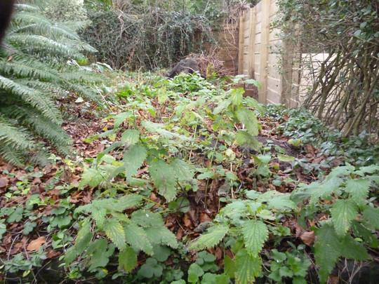 back of beech tree area