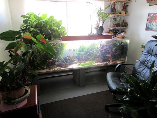 Other interest is AQUARIUM plants.
