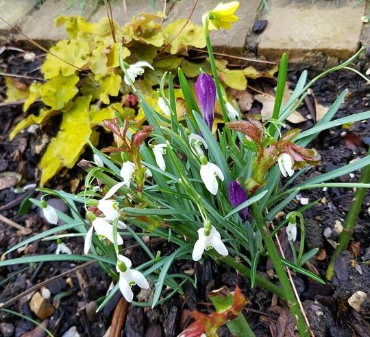 A little  Spring clump....