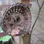 Wrens Nest?