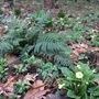 Woodland Mix