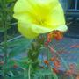 garden_031.jpg
