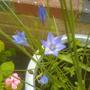 garden_032.jpg