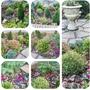 Revamped front  garden.. collage..
