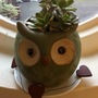 Owl Planter with Aeonium