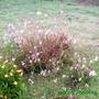 Yard_update_081108_053