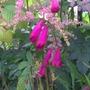 my garden flower