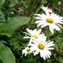 Summer_garden_2008_finn_and_popps_062