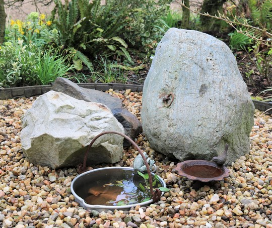 Close Up of Very Small Pond :)