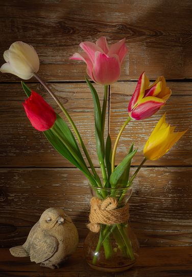 Tulips and the bird (Tulipa acuminata (Tulip))