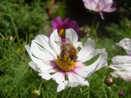 still plenty of bees around