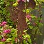 Ribes...Brian Jou... (Ribes Brian Jou.)