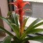 Close-up bromeliad.