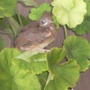 a close-up of the little bird