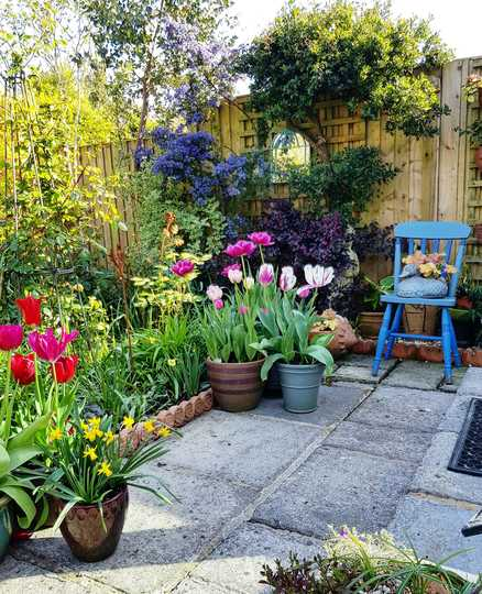 Blue Chair....