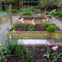 Raised beds April 2020