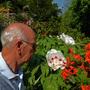 Paeonia's flowering  in the garden today