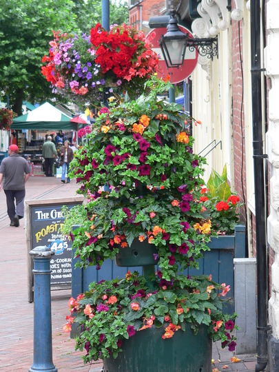 Oswestry in Bloom
