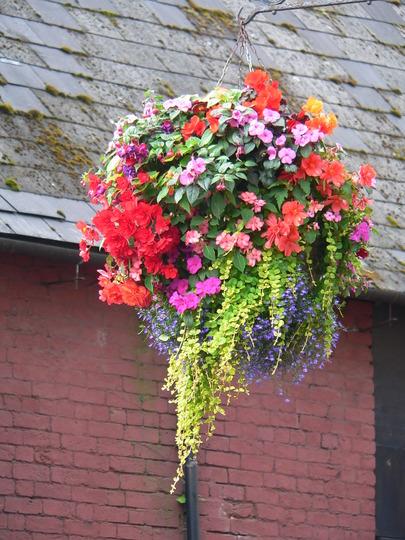 Oswestry in Bloom