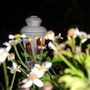 Lamp_in_back_garden
