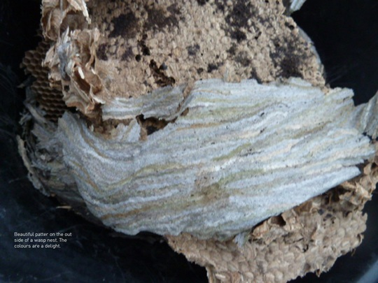 Wasp nest view 2