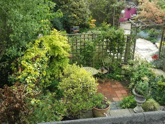 garden from bedroom window