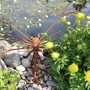 Dragonfly with Trolleus at the pond