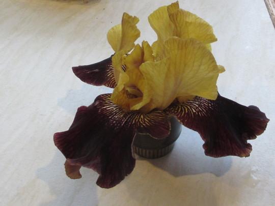 Causality of Weeding. (Bearded Iris)