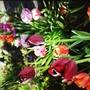 More tulip pots