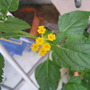 previous slideshow photo