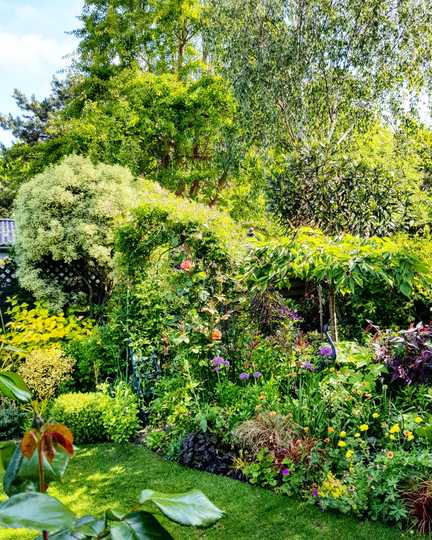 The garden....