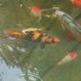 The fish..
