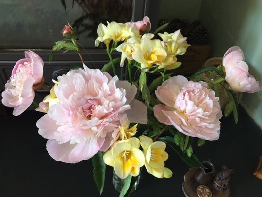 Some paeonies to share with you - not grown by me!