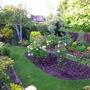 Rose bed in front garden.