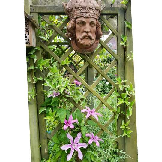 The King and the Clematis...
