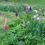 9718 Field flowers