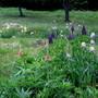 9723 field flowers