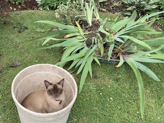 Garden supervisor.