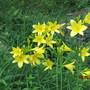 9821 best yellow in the garden