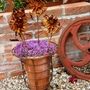 Rusty_flowers_in_pot_with_thyme