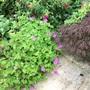 Mixed planting.