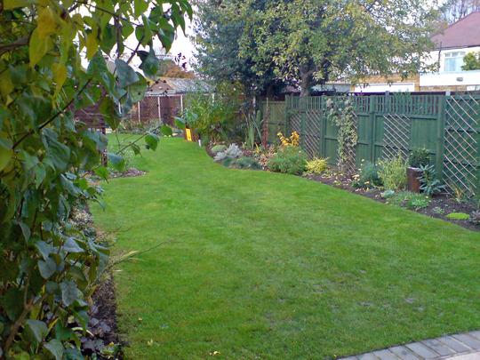 my garden nov 07