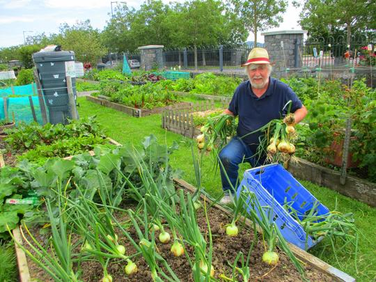 """The good news, my onions did great this year, and the other good news is after waiting 3 months for the barbers to reopen I have got a booking for a hair cut on Friday """"HURRAY"""""""