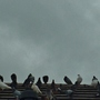 Pigeons galore....